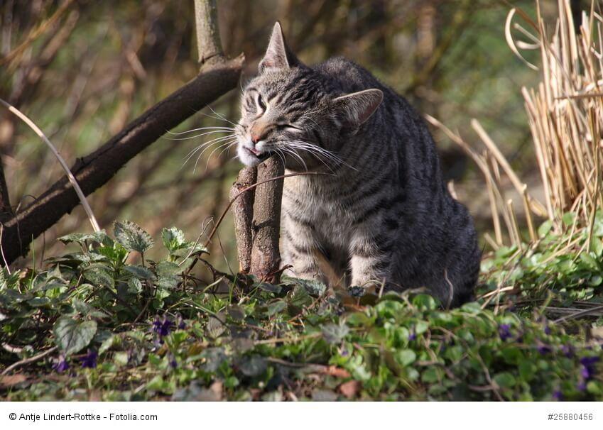 Katze markiert mit der Schnauze