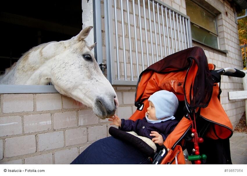 Schimmel schnuppert aus seiner Box an einem Baby im Kinderwagen