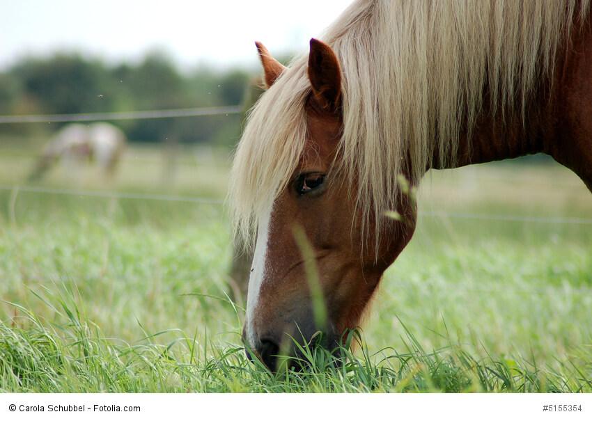 Pferd grast auf einer Wiese